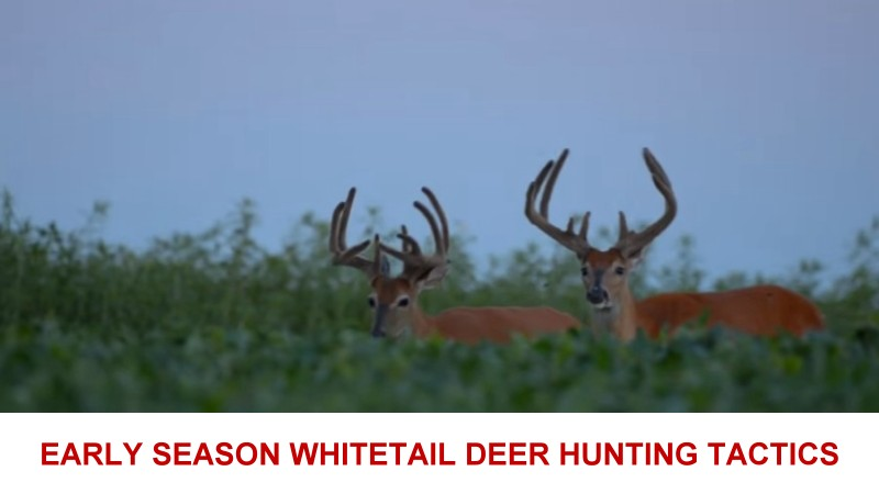 early season whitetail deer hunting tactics