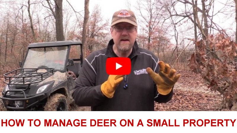 how                   to manage whitetail deer on a small property