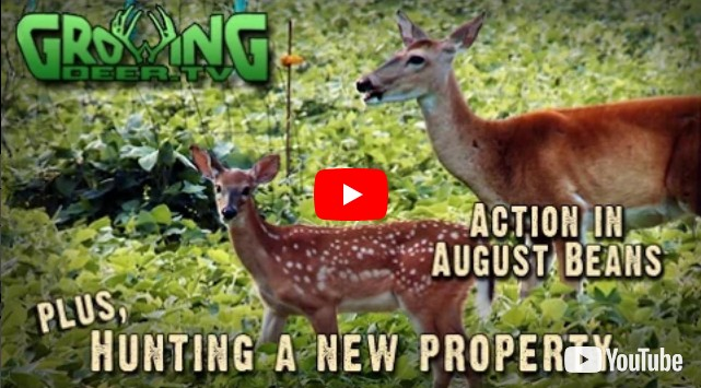 hunting                   whitetail deer on a new property