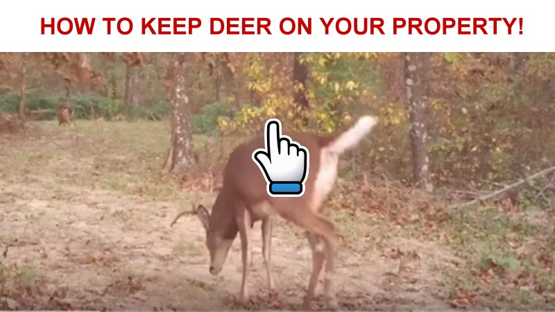 how to keep                   whitetail deer on your hunting property
