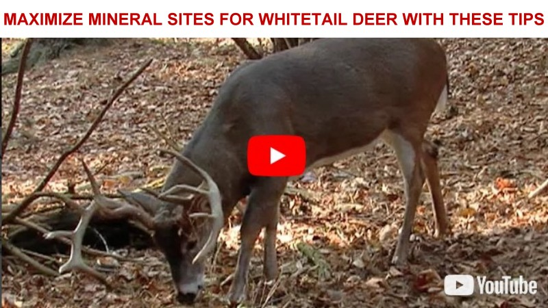 MAXIMIZE MINERAL SITES FOR WHITETAIL DEER WITH                   THESE TIPS