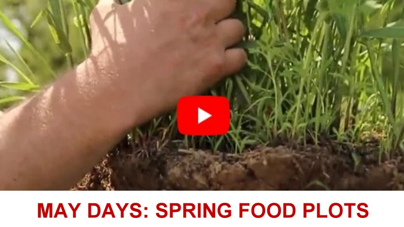 May Days:                   Spring Food Plots