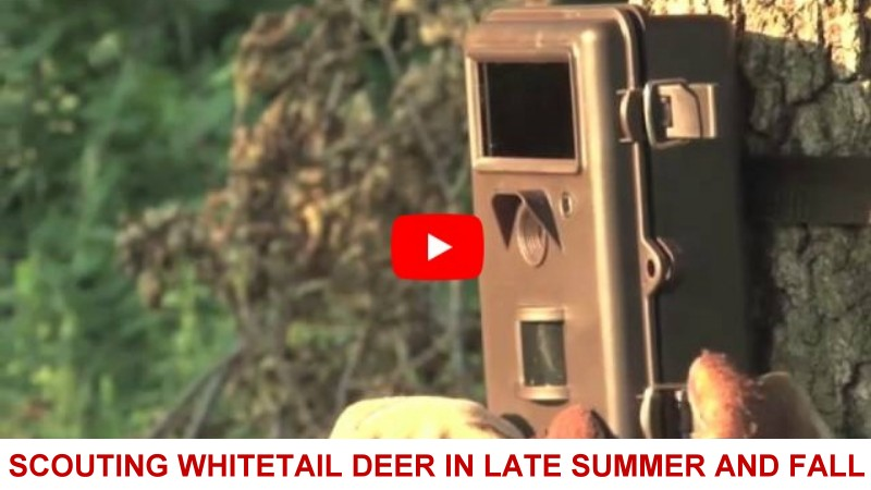 scouting whitetail deer in late summer and fall